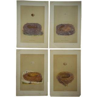 "Antique Morris Nest & Egg Woodblocks, 7""x10"""