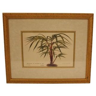 Framed Potted Botanical Fern Print