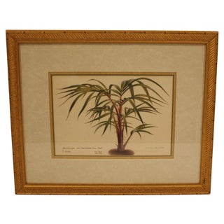 Framed Potted Botanical Fern Print