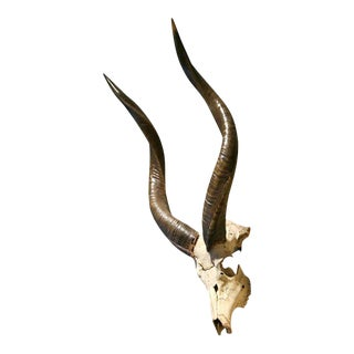 Vintage Kudu Mount