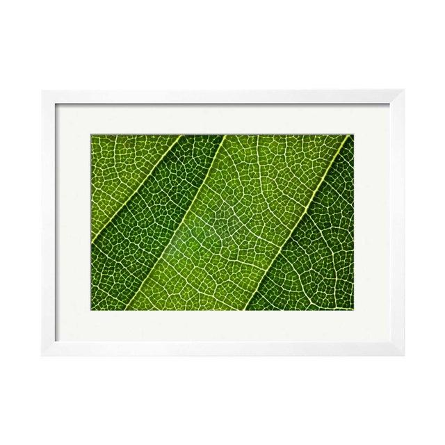 "Natalie Kinnear ""Leaf Lines III"" Framed Print - Image 1 of 2"