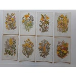 Image of Antique Botanical Lithographs - Set of 8