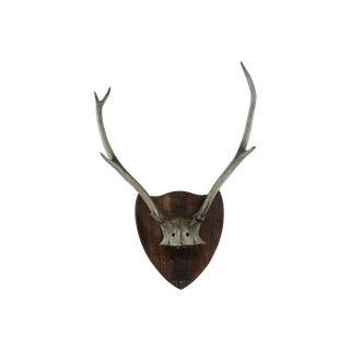 German Deer Antlers