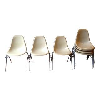 1957 Herman Miller Eames Fiberglass Shell Chairs - Set of 8