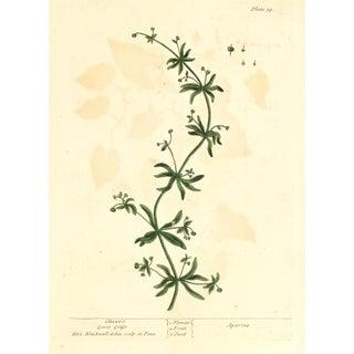 Antique 1795 English Botanical Etching