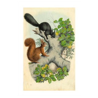 French '3 Squirrels' Archival Print