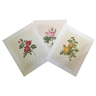 Vintage Botanical Prints - Set of 3