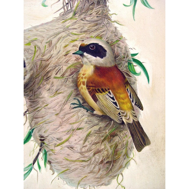 """Weaver Bird & Nest"" Oil on Canvas - Image 3 of 4"