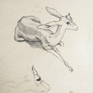 George Baer Gazelle Pencil Study Drawing