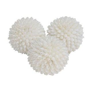 White Shell Spheres - Set of 3