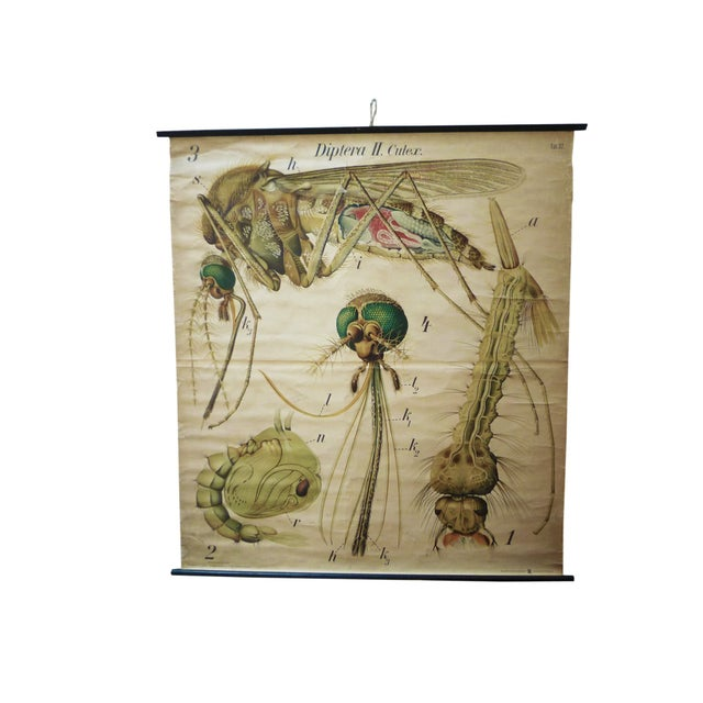 Image of Vintage Scientific Chart - Zoological Wall Plate