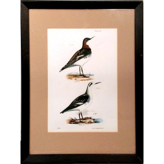 Antique Natural History of NY Bird Prints - A Pair - Image 3 of 9