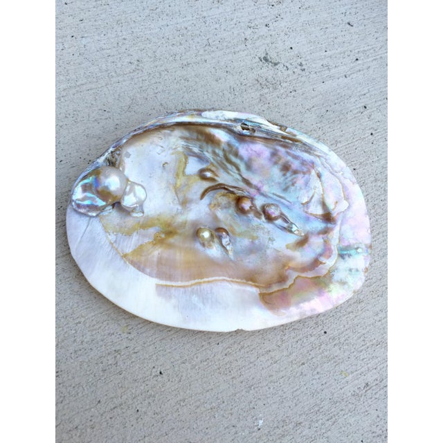 Natural Shell Tray With Baroque Pearl - Image 5 of 11