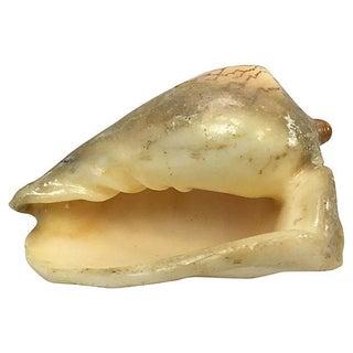 Vintage Conch Seashell Specimen