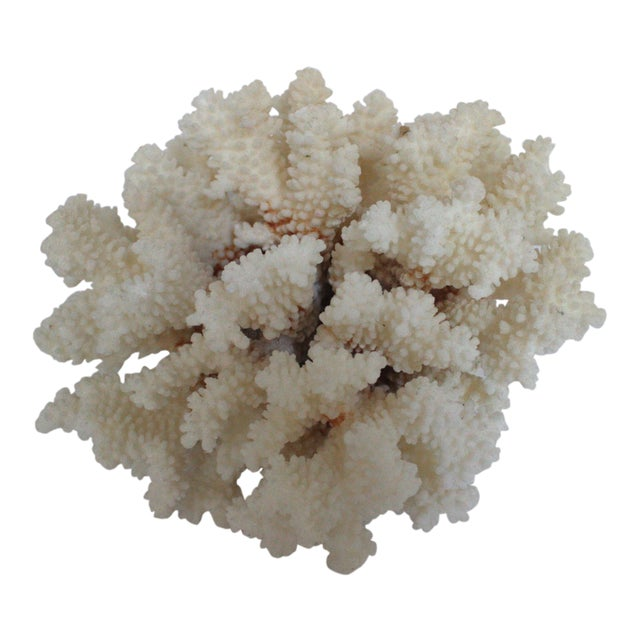 Natural Coral Specimen - Image 1 of 3