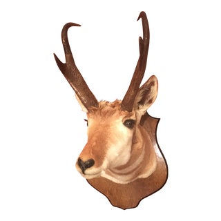 Wyoming Mounted Antelope Bust