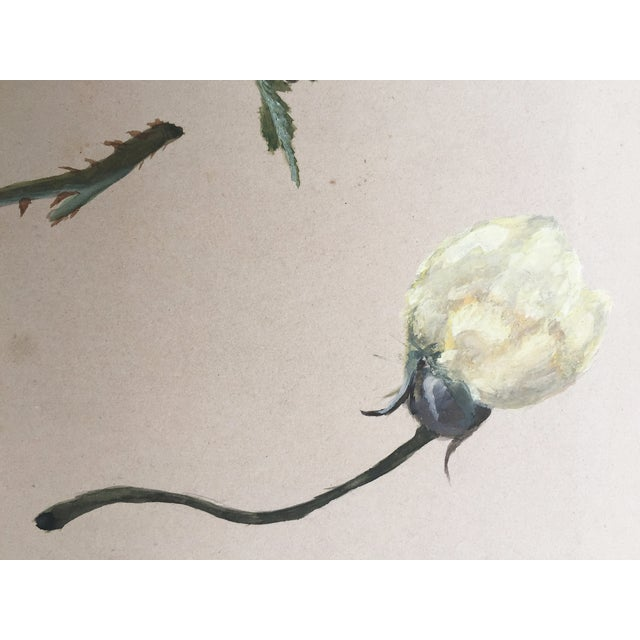 Image of Antique Painting Botanical Study in Gouache