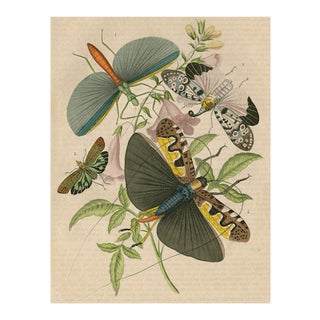 Vintage Flying Insects Archival Print