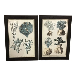 Framed Coral Prints - A Pair