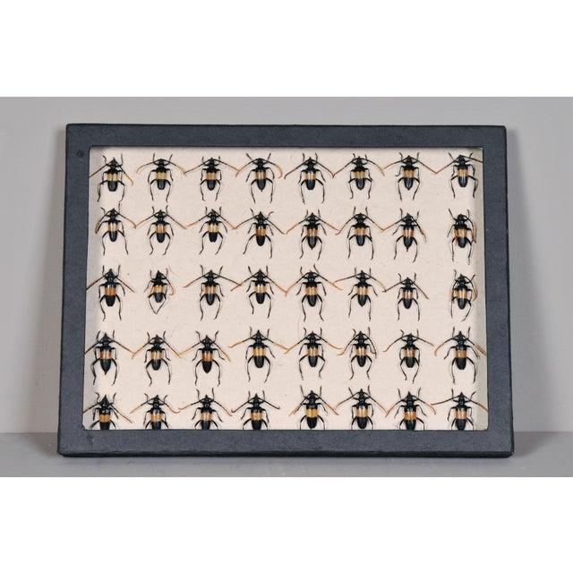 Vintage Sarreid LTD Beetles Collection Box - Image 2 of 2