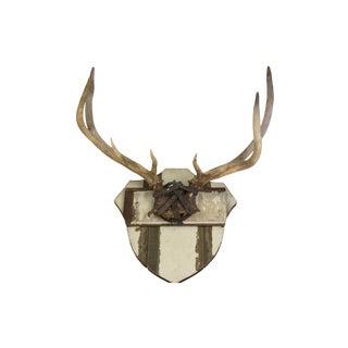 Vintage Elk Mount