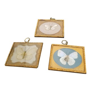Mini Antique Victorian Framed Butterfly - Set of 3