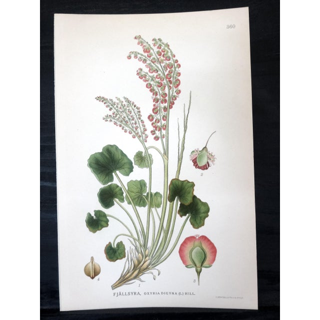 Swedish Floral Prints - Image 4 of 6