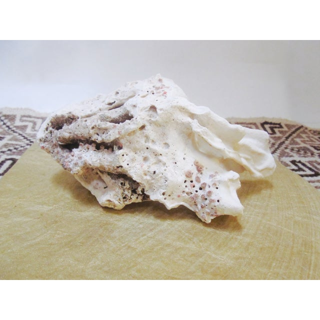 Abstract Organic Large Natural Coral Specimen Shell Rock - Image 4 of 7