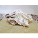 Image of Abstract Organic Large Natural Coral Specimen Shell Rock