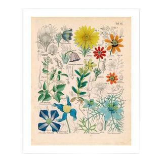 Antique 'Botanical Plate' Archival Print