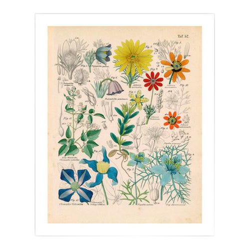 Antique 'Botanical Plate' Archival Print - Image 1 of 4