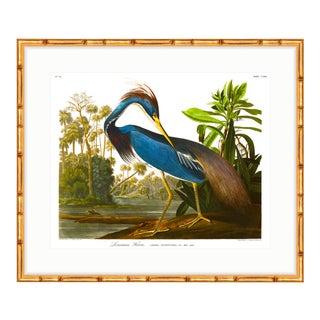 "Gold Bamboo ""Louisiana Blue Heron"" Audubon Birds of America Framed Print"