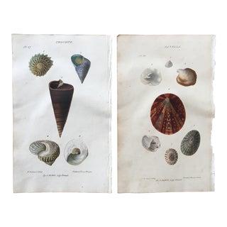 1823 John Mawe Sea Shell Lithograph Prints - A Pair