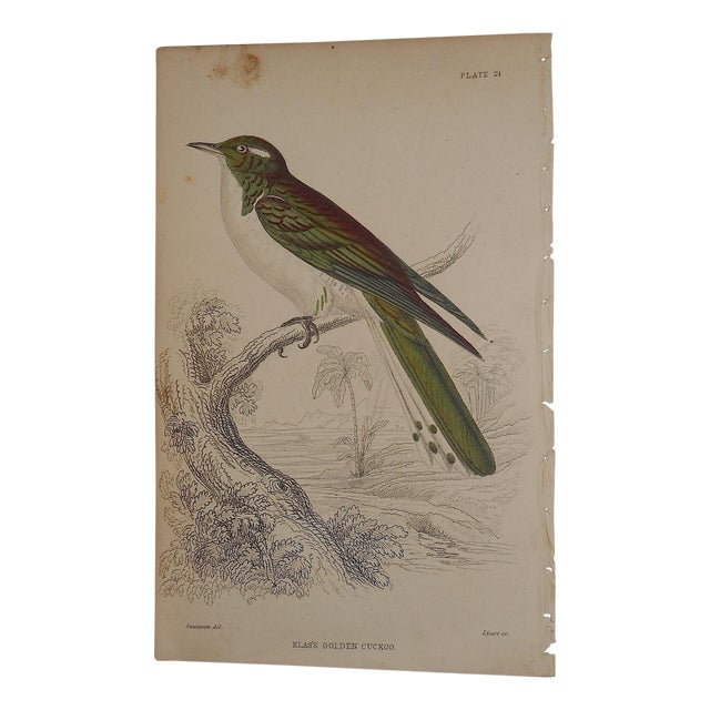 Image of Antique Hand Colored Cuckoo Bird Engraving