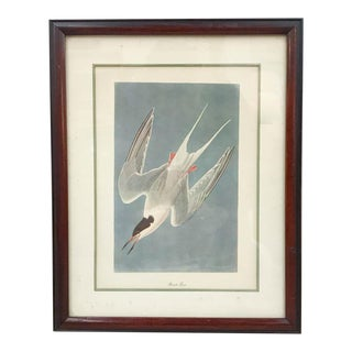 Antique Audubon Style Bird Print