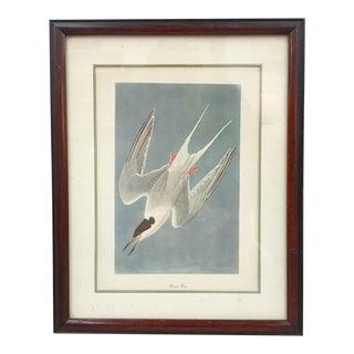 Antique Audubon Style Bird Print
