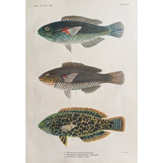 Tropical Fish Color Lithograph , 1905