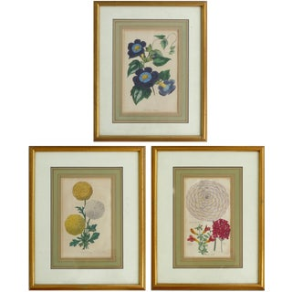 1830 English Botanical Engravings- Set of 3