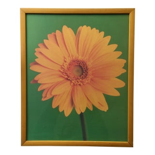 70s Daisy Gerbera Photo Print