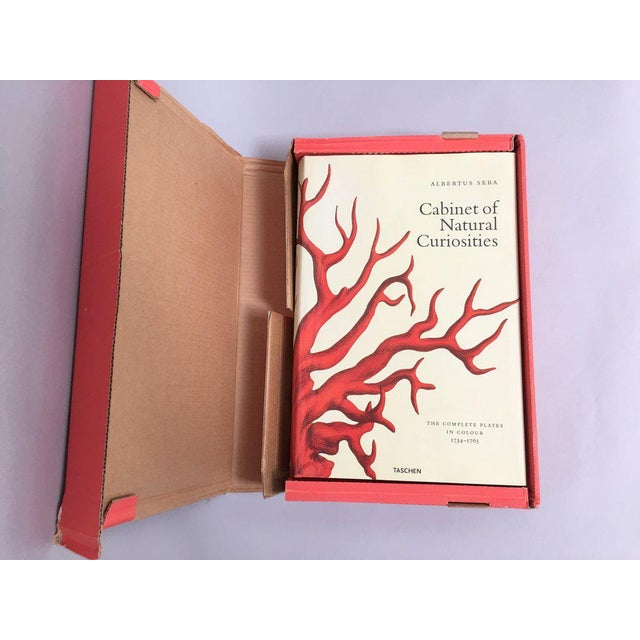 'Cabinet of Natural Curiosities' Oversized Coffee Table Book - Image 10 of 11