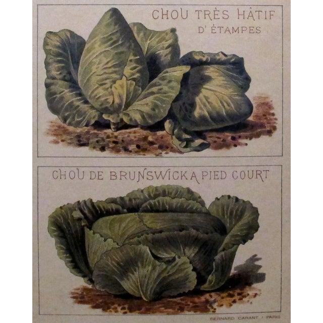1900 Original French Vintage Vegetable Chart - Image 4 of 6