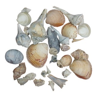 Group of 31 Ecclectic Sea Shells