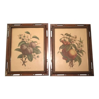 Framed Botanical Prints of Stone Fruit - A Pair