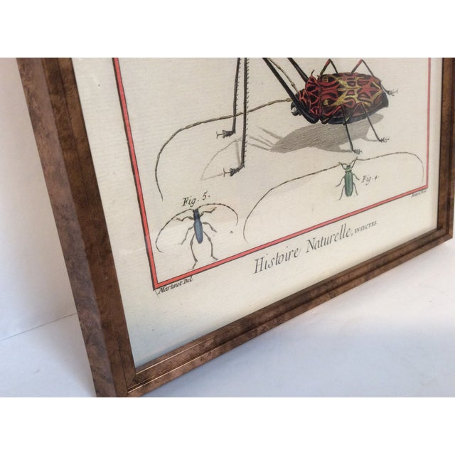Six Framed Scientific Bugs & Insects Prints - Image 3 of 3