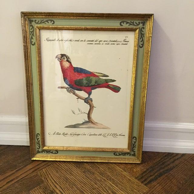 Bird Print Art - Set of 4 - Image 3 of 5