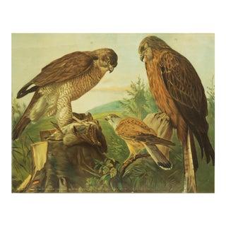 German birds of prey school poster