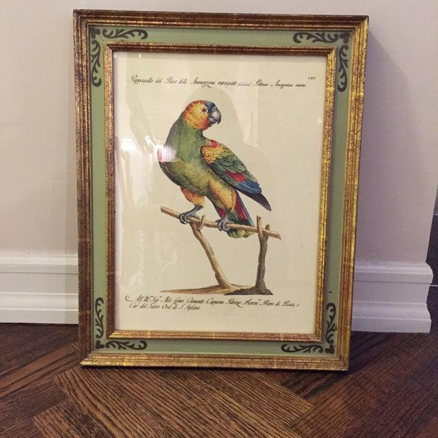 Bird Print Art - Set of 4 - Image 2 of 5