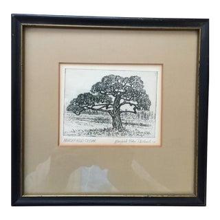 """Framed """"Marshfield Cedar"""" Engraving"""