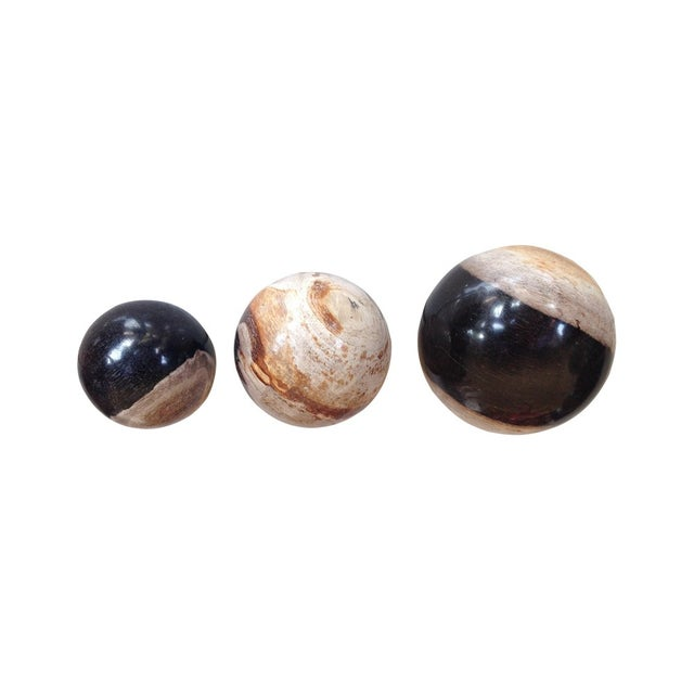 Image of Antique Petrified Wood Ball - Set of 3