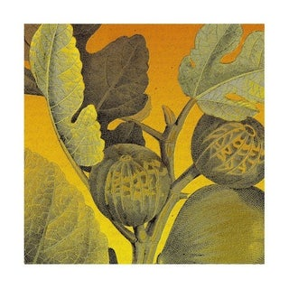 Antique Golden Fig Archival Print